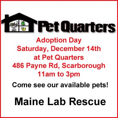Maine Lab Rescue Dogs For Adoption
